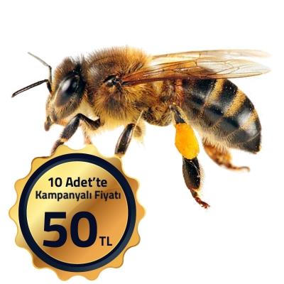 Arılar: arı türleri, açıklaması, özellikleri, arıcılık ürünleri